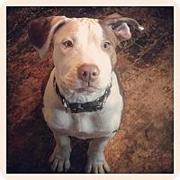 Adopt A Pet :: Aida - West Allis, WI