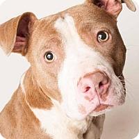 Adopt A Pet :: *JOY - Sacramento, CA