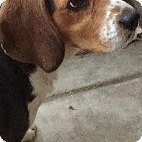 Adopt A Pet :: Bryan - San Diego, CA