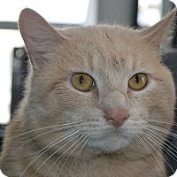 Adopt A Pet :: Frosty - Monroe, MI