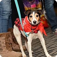 Adopt A Pet :: Dalton - Pittsburgh, PA