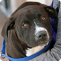 Adopt A Pet :: Dodge - Palmdale, CA