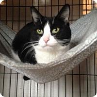 Adopt A Pet :: Baby - Freeport, NY
