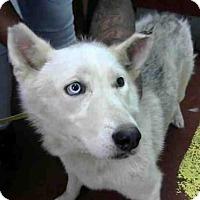 Adopt A Pet :: CATULLA - Atlanta, GA