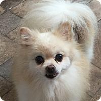 Adopt A Pet :: NUT - Durham, NC