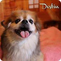 Adopt A Pet :: Destin - Benton, LA