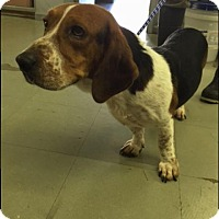 Adopt A Pet :: Skid - Hamilton, GA