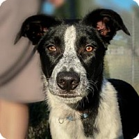 Adopt A Pet :: Woods - Wichita, KS