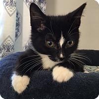 Adopt A Pet :: Elliott - Wayne, NJ