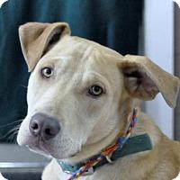 Adopt A Pet :: Silver - Yreka, CA