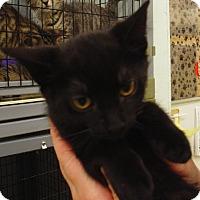 Adopt A Pet :: Joanne - Kalamazoo, MI