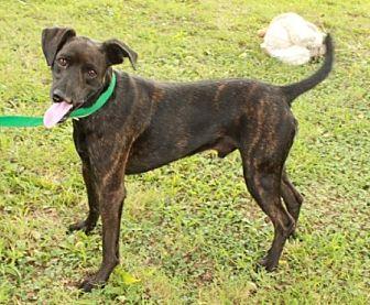 Hound (Unknown Type) Mix Dog for adoption in Newark, New Jersey - Cliff