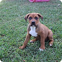 Adopt A Pet :: Sheena - Austin, AR