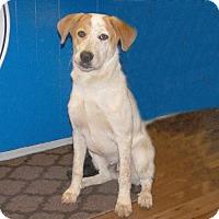 Adopt A Pet :: 16-d08-001 Mickey - Fayetteville, TN