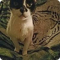 Adopt A Pet :: Spotty - Virginia Beach, VA