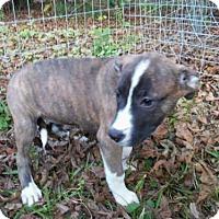 Adopt A Pet :: Sable CC - Providence, RI