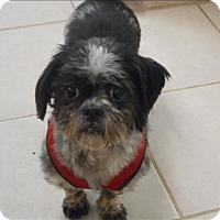 Adopt A Pet :: Sadie - Osage Beach, MO
