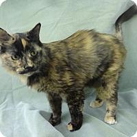 Adopt A Pet :: Eden - Olive Branch, MS