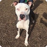 Adopt A Pet :: FIONA - Williamsburg, VA