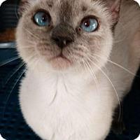 Adopt A Pet :: Bess - Greeley, CO
