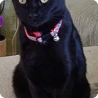 Adopt A Pet :: JETTA - ADOPTED 1-28-17 - detroit, MI