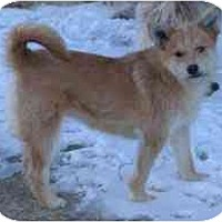 Adopt A Pet :: Goldie - Dodge City, KS