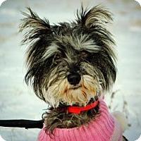 Adopt A Pet :: Shine - Cheyenne, WY