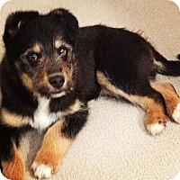 Adopt A Pet :: Zeus - Saskatoon, SK
