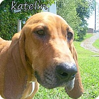 Adopt A Pet :: Katelin - Georgetown, KY