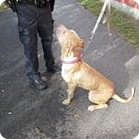 Adopt A Pet :: **URGENT**82 King **RESCUE** - Berlin, CT