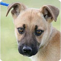 Adopt A Pet :: Muddles - kennebunkport, ME