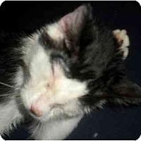 Adopt A Pet :: Lowki - Summerville, SC