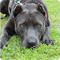 Adopt A Pet :: Val - Justin, TX