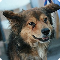 Adopt A Pet :: Dusty - Canoga Park, CA