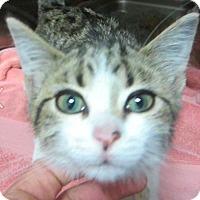 Adopt A Pet :: Vicki - Springdale, AR