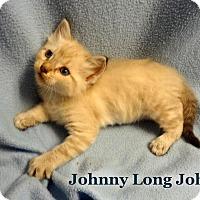 Adopt A Pet :: Johnny Longjohn - Bentonville, AR
