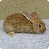 Adopt A Pet :: Iris - Bonita, CA