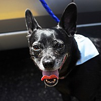 Adopt A Pet :: Ellis (aka TACO!) - Detroit, MI