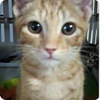 Adopt A Pet :: Mack - Chandler, AZ