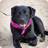 Adopt A Pet :: Ruby - Enfield, CT
