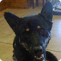 Adopt A Pet :: Elena - Wickenburg, AZ