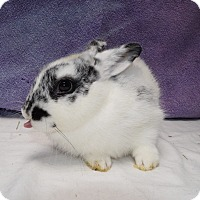 Adopt A Pet :: Stud - Fountain Valley, CA