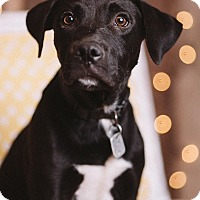 Adopt A Pet :: Bibbity - Portland, OR