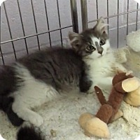 Adopt A Pet :: Angelica - River Edge, NJ