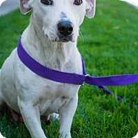 Adopt A Pet :: Maggie (DENVER) - Fort Collins, CO
