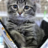 Adopt A Pet :: Roxanne (AA) 4.20.16 - Orlando, FL