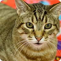 Adopt A Pet :: Ansel - Great Falls, MT