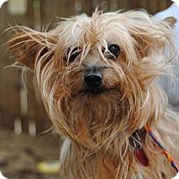 Adopt A Pet :: Pollie - Philadelphia, PA