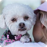 Adopt A Pet :: Lola - San Marcos, CA