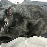 Adopt A Pet :: Snow - Union, NJ